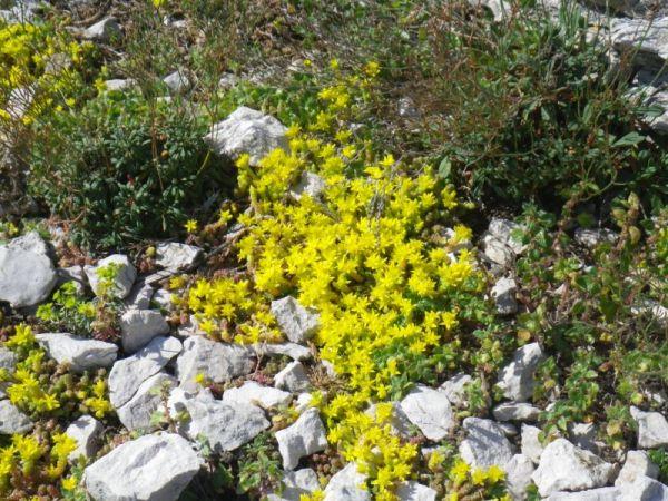 Végétation calanques